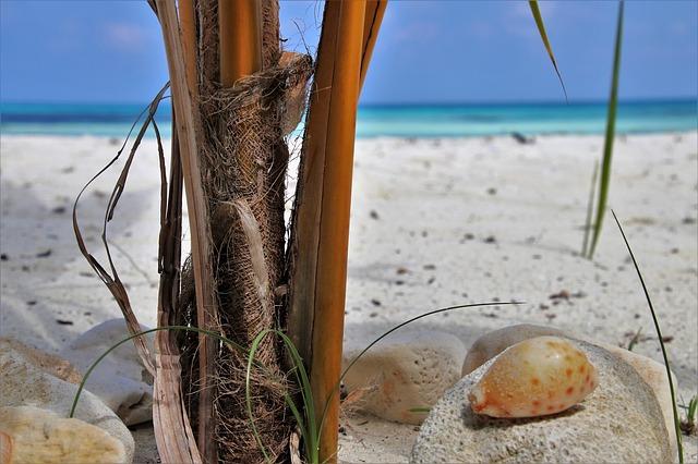 Nager avec les requins aux Maldives