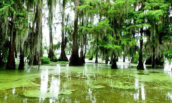 La Louisiane en quelques images