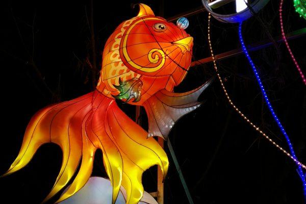 Festival Baie des Lumières à Nice